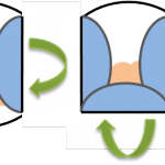 Spring rolls explaination